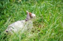 cat0012-001_m.jpg