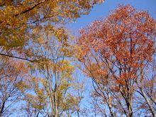 autumn 004.jpg