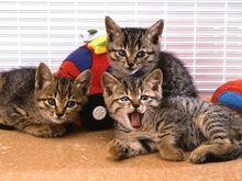 cat0046-026_m.jpg